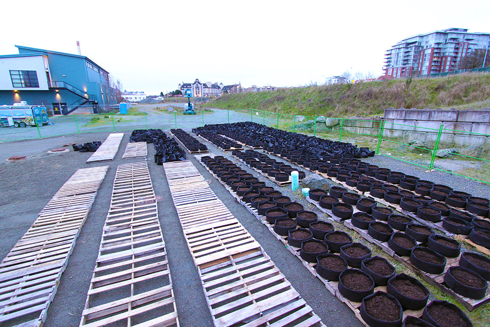 Organic veggie garden comes to life at Dockside Green